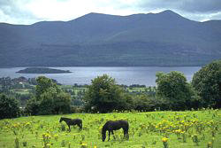 Best of Ireland Escorted Tour